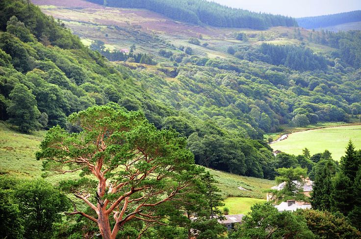 In Green Valley Of Wicklow Hills. Ireland by Jenny Rainbow