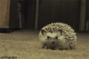 when i watch a scary movie and i'm holding a pillow. this hedgehog is really cute
