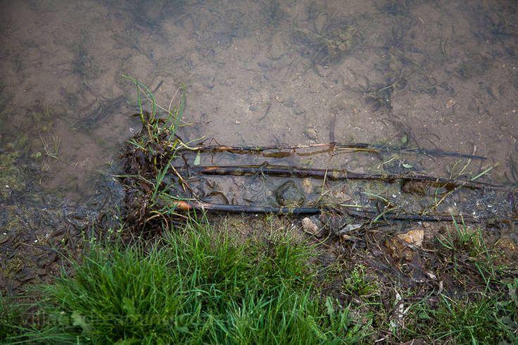 wetland detail (7 of 14)