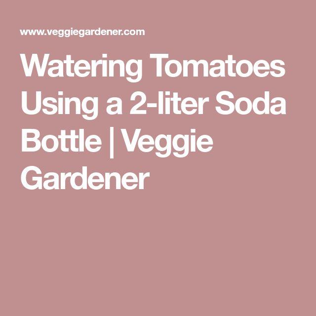 Watering Tomatoes Using a 2-liter Soda Bottle | Veggie Gardener