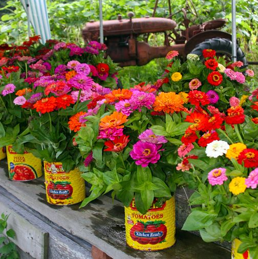 Going the colorful, casual route for the wedding flowers? Consider zinnias in tin cans.