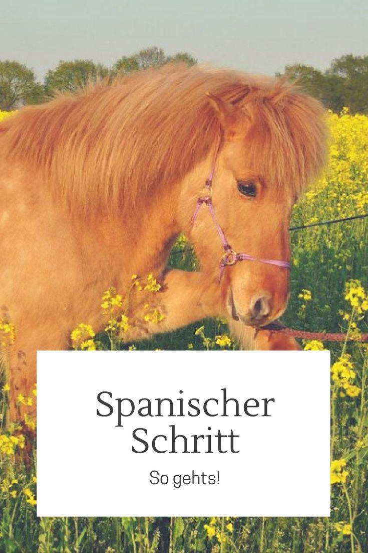 So lernt dein Pferd den spanischen Schritt