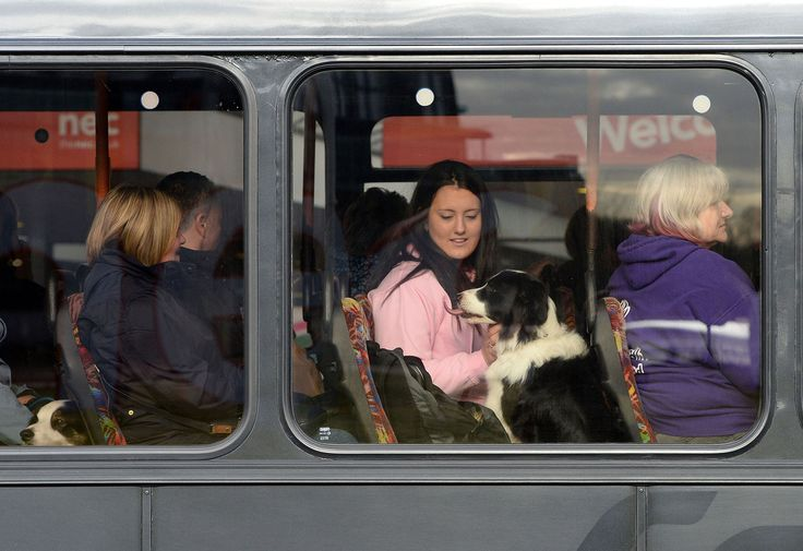 Owners arrive with their dogs by bus.   photos of pooches preparing for their big moment at Crufts, the world's largest dog show