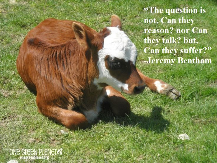 The question is not can they talk, can they reason, but can they suffer? - Jeremy Bentham