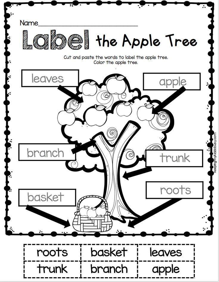 Labeling Kindergarten Label The Apple Tree Worksheet Literacy Center For Back To School In S Kindergarten First Day Labeling Kindergarten Fall Kindergarten