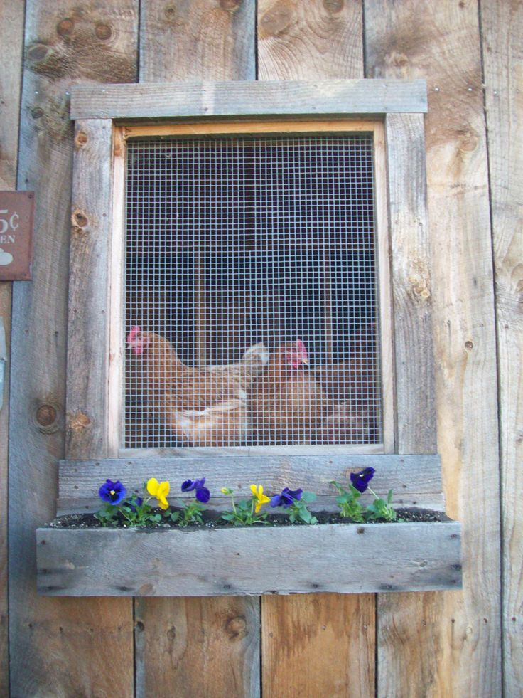 Coops Windows, Windows Boxes, Chicken Coops, Windows Flower Boxes, New Girls, Chicken House, French Country Design, Hens, Chicken Farms