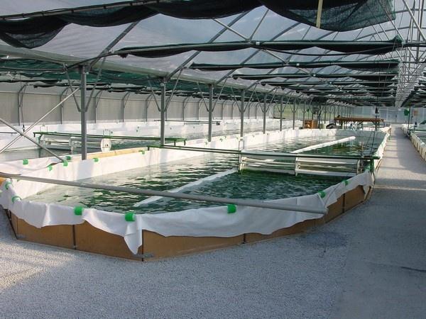 """Spirulina Farm """"Spiruline-de-Savoie"""", France"""