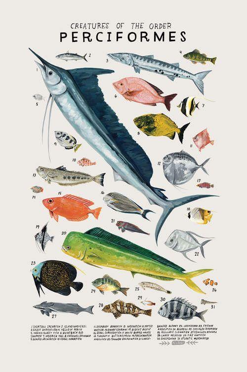 Creatures of the order Perciformes by kelzuki on Etsy