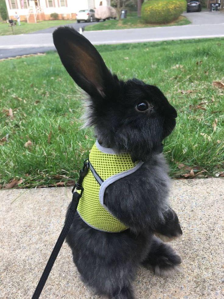 je suis le lapin de Pâques