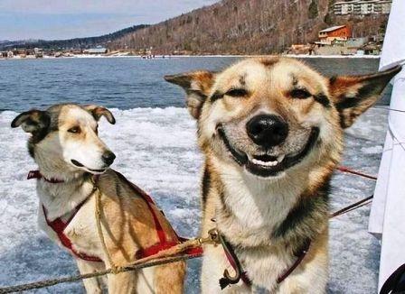 Mas perros sonrientes