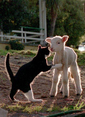 Shall we play?                         #funnycats #lolcats #catsfunny