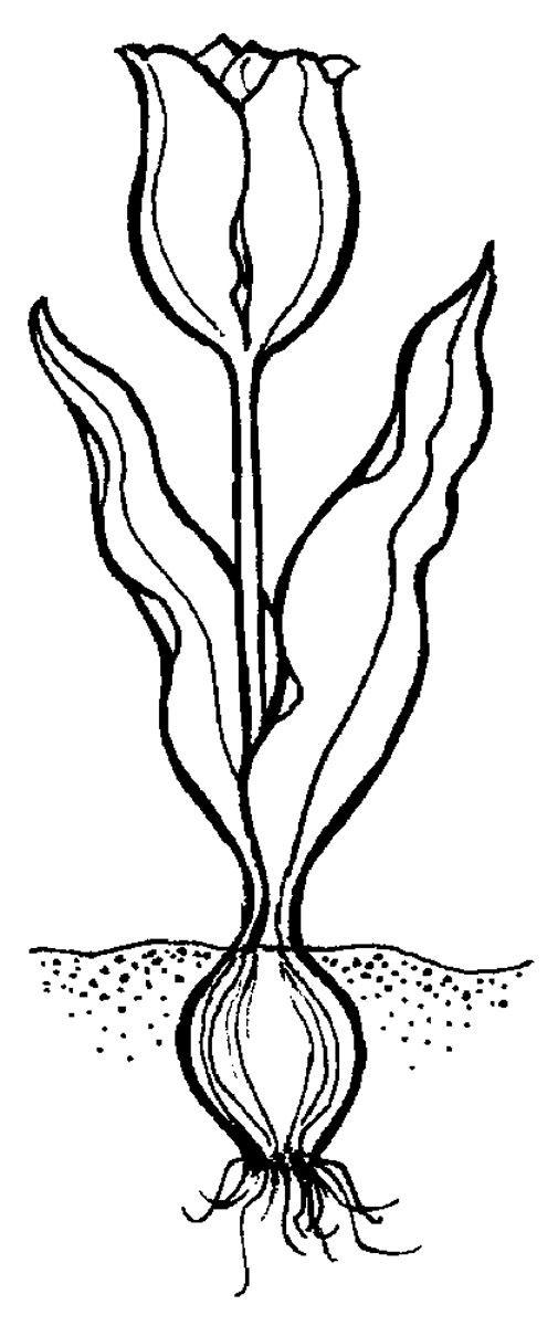"""Képtalálat a következőre: """"növény részei rajz"""""""