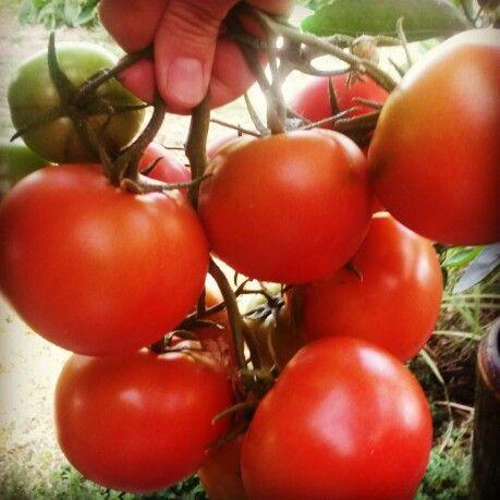 Tomato ♥ March 2014