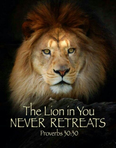The righteous are as BOLD, BRAVE and COURAGUEOUS as a Lion. Proverbs 28:1