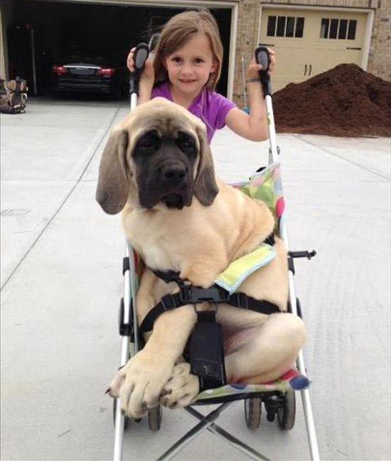 Юмор, музыка, развлечения ( Humour, music, entertainments): Дочери не нравится, когда собака бежит прочь.