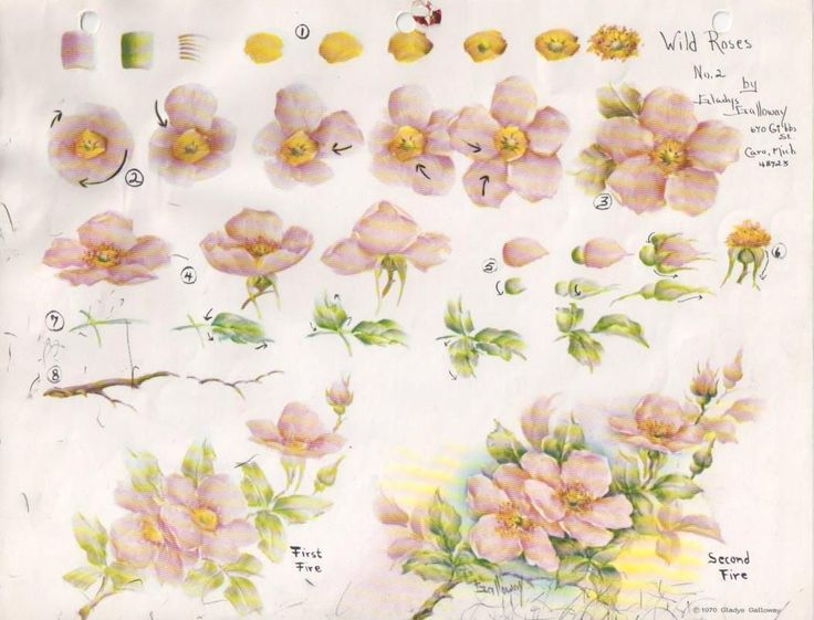 Gladys Galloway China Painting Study No 2 Wild Roses Pattern Instructions | eBay