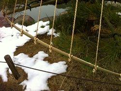 Japanese Gardens: Yukitsuri - 雪吊り