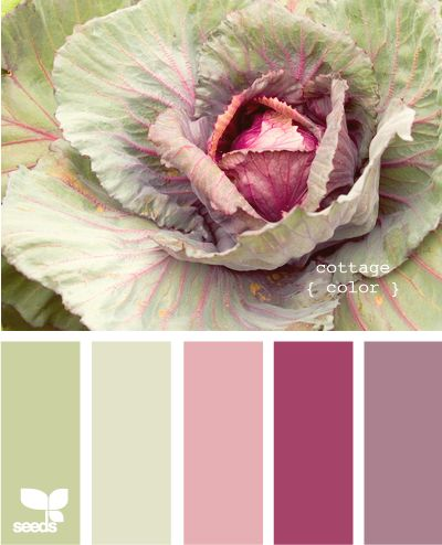 43 best oriental cabbages are in my garden images on for Oriental colour palette