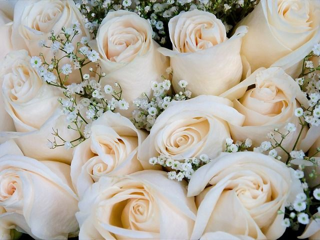 Roses, Bouquet, Rose Bloom, Flora, White, Beauty