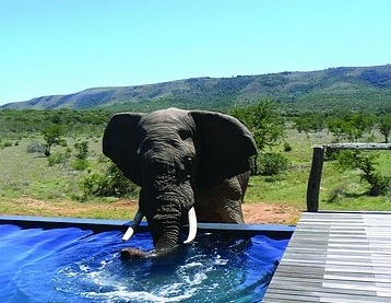 Google Image Result for http://www.greatescapes.co.za/images/js_pumba5.jpg