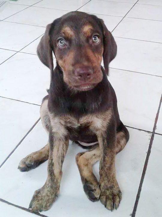 Puppy Canela