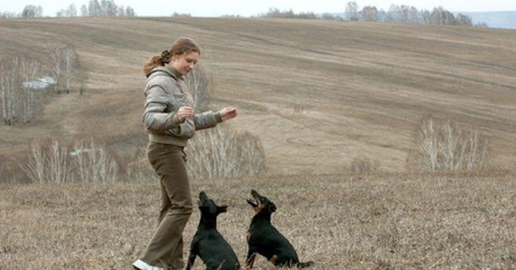 Como fazer uma caixa séptica para dejetos caninos. O sistema séptico para cães é uma alternativa ideal à prática de colocar sacos com dejetos de cachorros na sua lixeira. Para comunidades que não permitem o descarte de fezes em lixeiras comuns, a composteira de fezes caninas é uma saída simples e de baixo custo. Mesmo que você possa comprar uma no pet shop, fazer a sua é fácil e rápido.