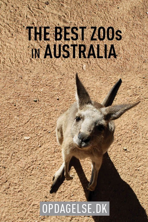 The 9 best zoo's in Australia. We have visited lots of zoos in Australia, and this is our favourites.