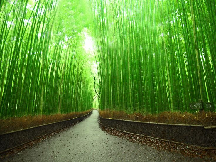 Best Pathways Images On Pinterest Beautiful Places Buddhist - This amazing image is being called the most beautiful photo of kyoto ever