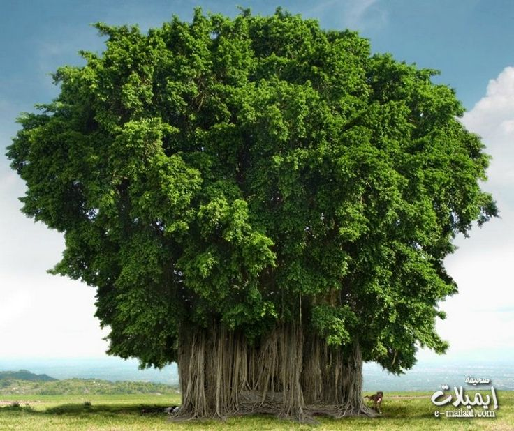 truly magnificent tree