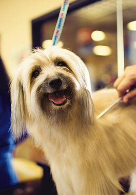 Dog Groomers: Baths & Brushing for Puppies & Adults   PetSmart