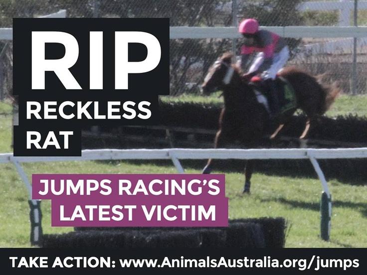 Jumps Racing Kills