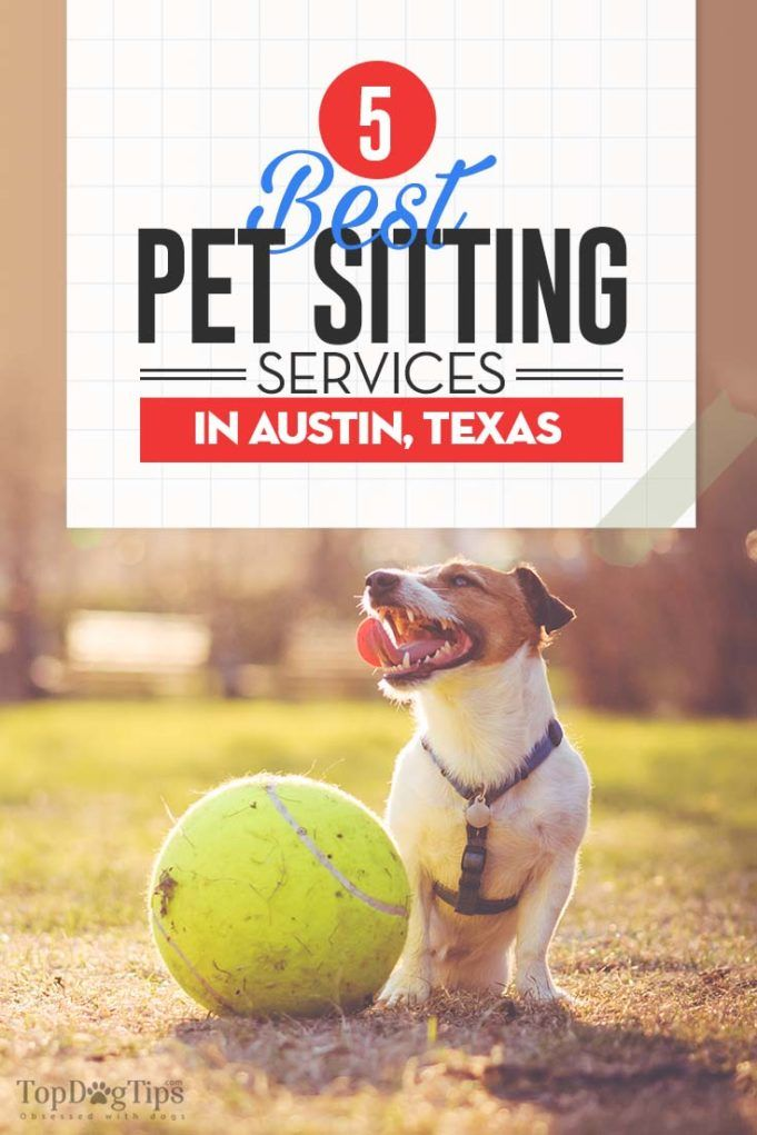 5 Best Dog Boarding Services In Austin Texas Dog Boarding Pet