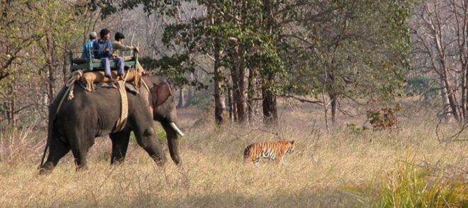 Kanha National Park famoso tra i parchi nazionali indiani, sito nel Madhya Pradesh. l'area di Kanha era suddivisa in due santuari, Hallon e…