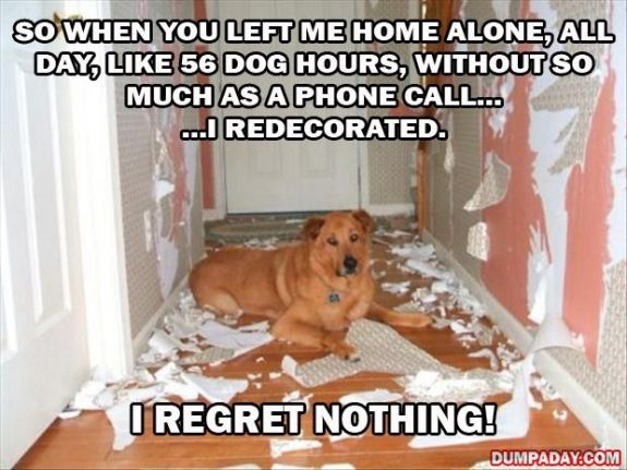 If Malibu wasn't crated when we aren't home, this is probably what I would walk into