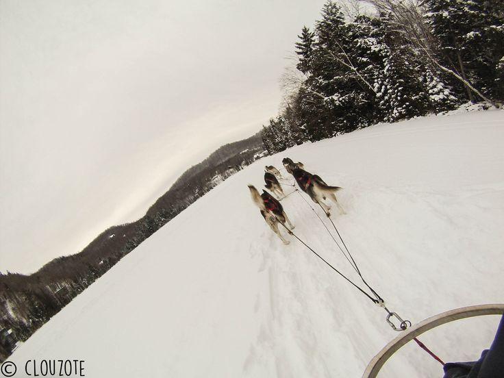 Ski doux, chiens de traineau