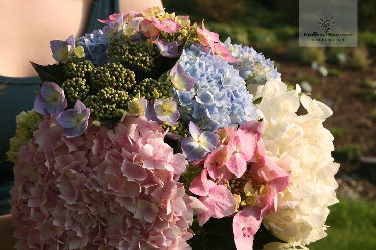 Die Hortensien der Endless Summer® Collection eignen sich übrigens auch hervorragend für traumhafte Blumensträuße. So nehmen Sie den endlosen Sommer ganz einfach mit ins Haus.