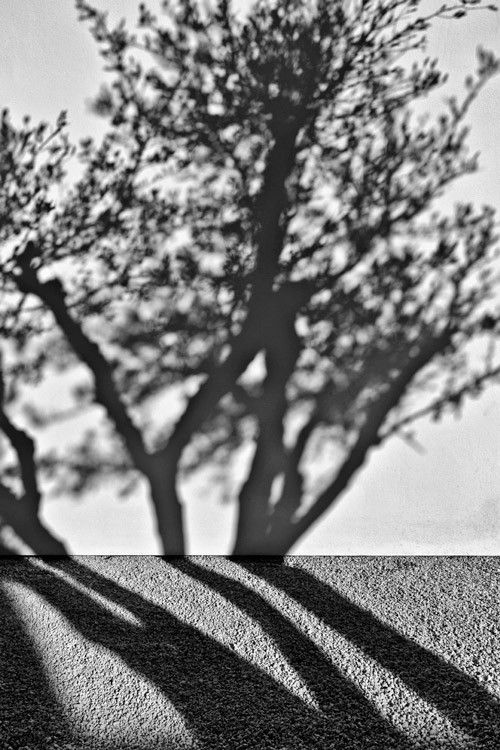A game of shadows   #Greece #Tree #B&W #Black #white #Photography #Contrast