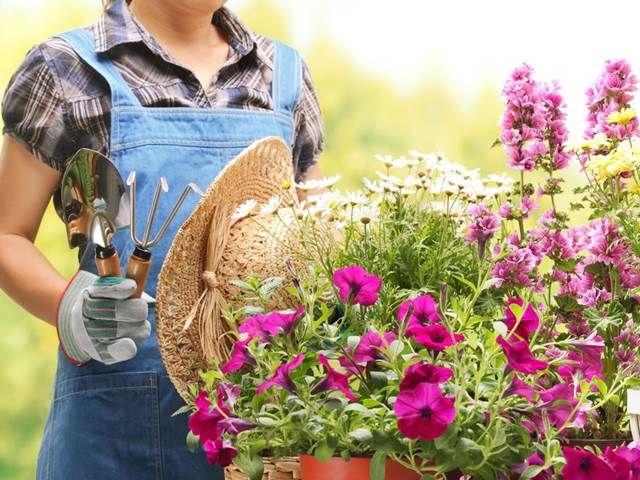 """Zatímco některé rostliny se jako sousedi příliš """"nemusejí"""", jiné tvoří přímo harmonické dvojice. Než se letos pustíte do zakládání záhonků, ..."""