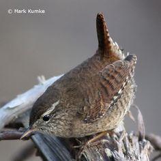 Vögel im Winter im Garten erkennen und bestimmen: Hier finden Sie Steckbriefe und Stimmen der 22 häufigsten Wintervögel beim LBV!