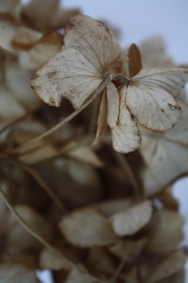 Even dead flowers can beautiful