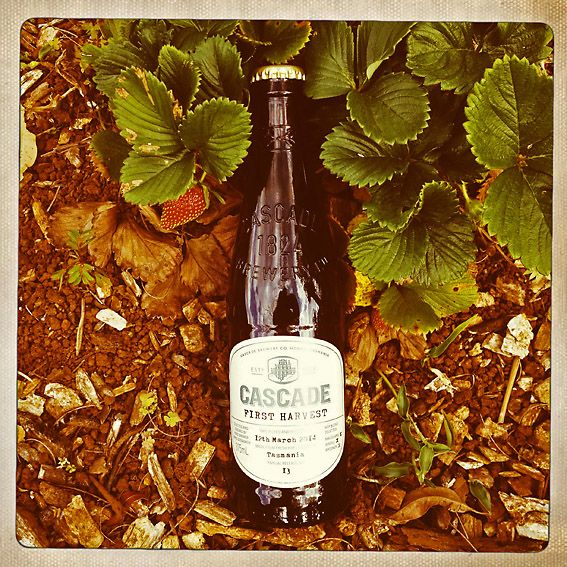 Cascade First Harvest is a limited edition ale from one of Australia's oldest breweries. The Hobart-based brewers' 2014 edition comes in a vintage style bottle celebrating their 190 year brewing tr...