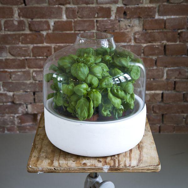 De Serre pot van Serax kan gebruikt worden voor decoratieve plantjes, kruiden of zelfs sla. Verkrijgbaar via www.houtmerk.nl