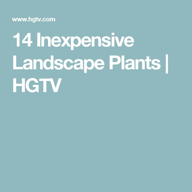 1000 ideas about inexpensive landscaping on pinterest landscaping ideas inexpensive - Plants for every room in your home extra comfort and health ...