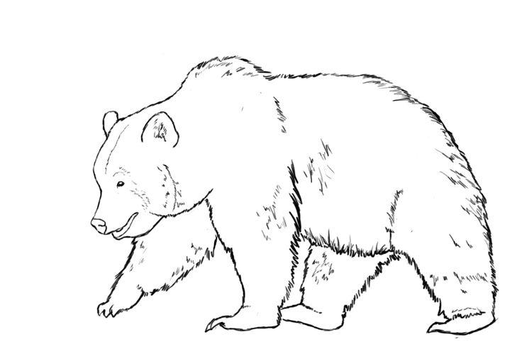 How To Draw A Bear | How to draw | Dieren tekenen, Tekenen ... Walking Bear Drawing