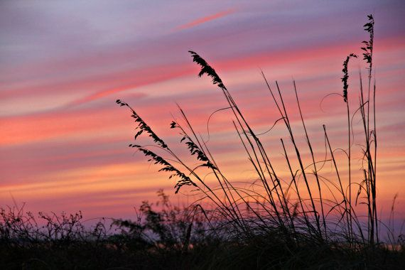 Fine Art Digital Download Sea-oats Silhouette with Sunset