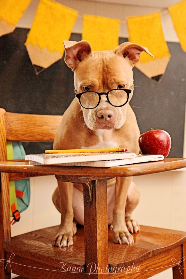 pencil banner is adorable; back to school photo shoot with a dog!