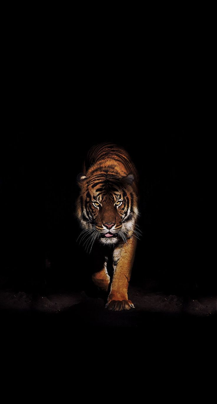wallpapers 4k free iphone mobile games Tiger