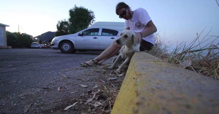 Encontró un perro callejero lleno de pulgas tirado sobre cristales rotos cuando estaba de vacaciones en Grecia y le ablandó el corazón