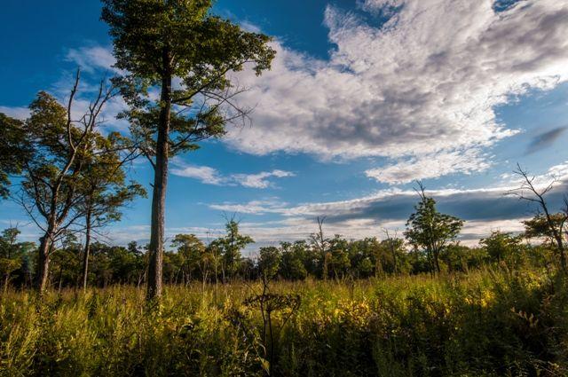 Пейзаж, август, конец августа, конец лета, уссурийская тайга