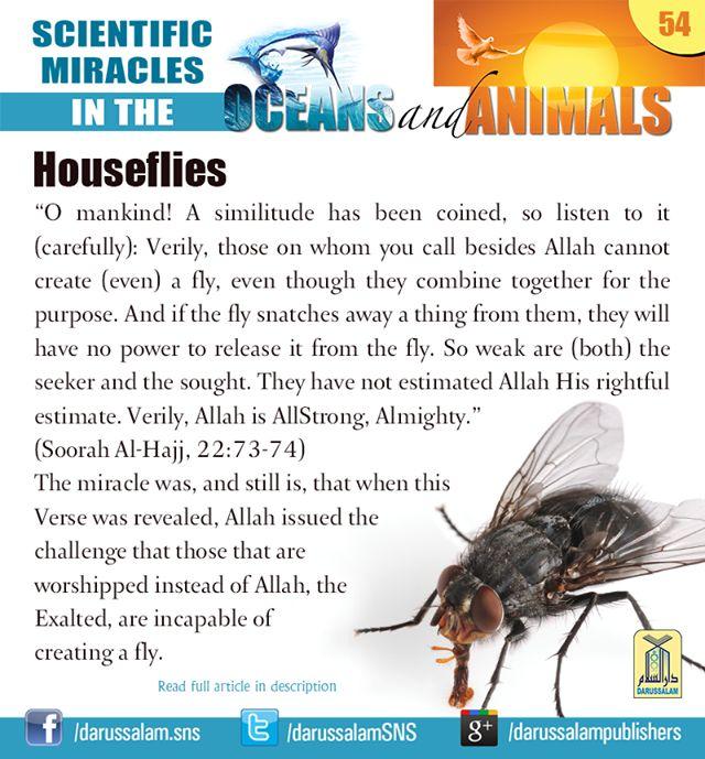 nouman ali khan books pdf